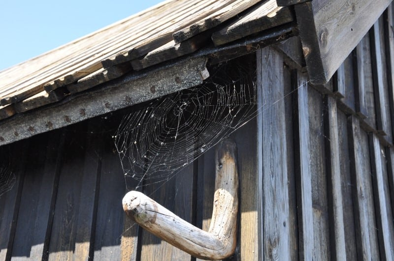 Can You Keep a House Spider as a Pet