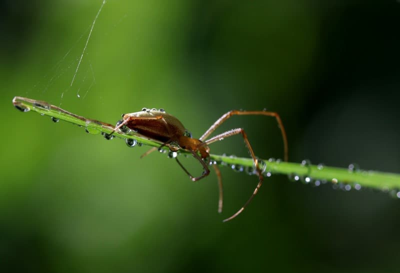 Do Spiders Drink Water