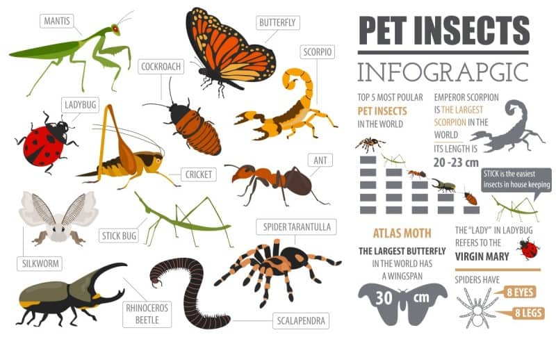 pet-insects-info-graphic