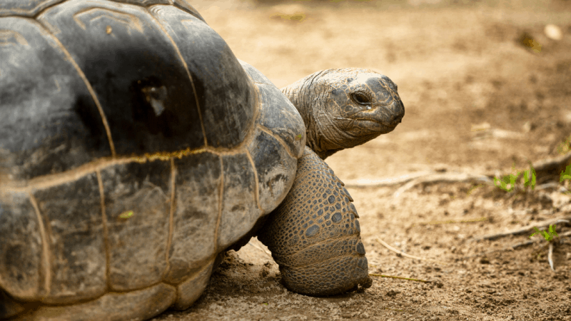 What Should You Keep a Tortoise In