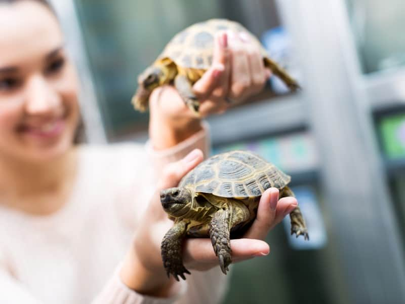 Do Male or Female Tortoises Make Better Pets