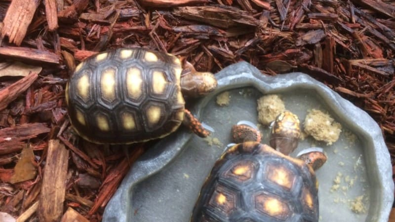 Best Tortoise Water Dishes