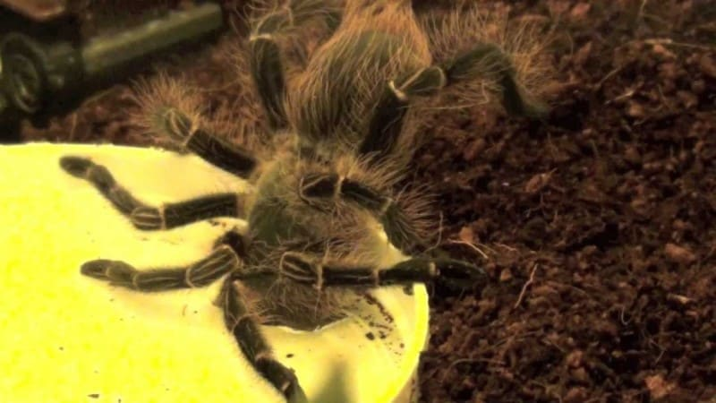 Best Water Dishes for Tarantula