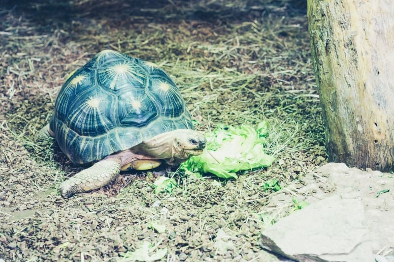 Do Tortoises and Turtles Smell