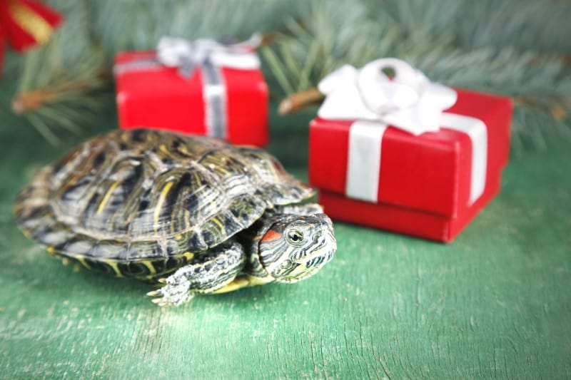 Gift Ideas for Tortoise and Turtle Lovers