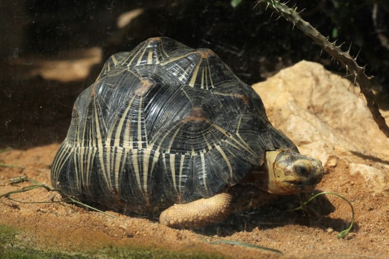 What Makes Tortoises and Turtles Reptiles