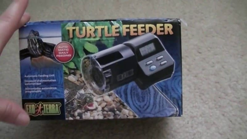 Best Automatic Turtle Feeders