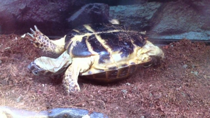How To Comfort a Dying Turtle