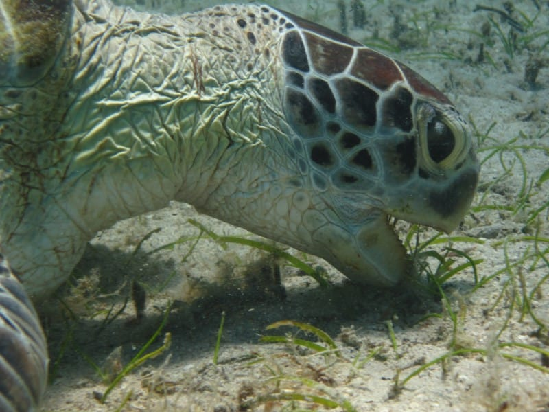 What Turtles Do and Don't Eat