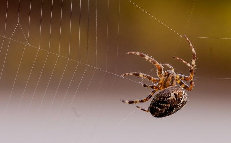 Do Spiders Scream