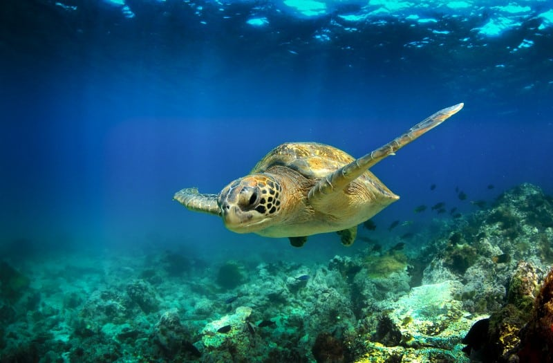 How Long Can Turtles Live Without Food